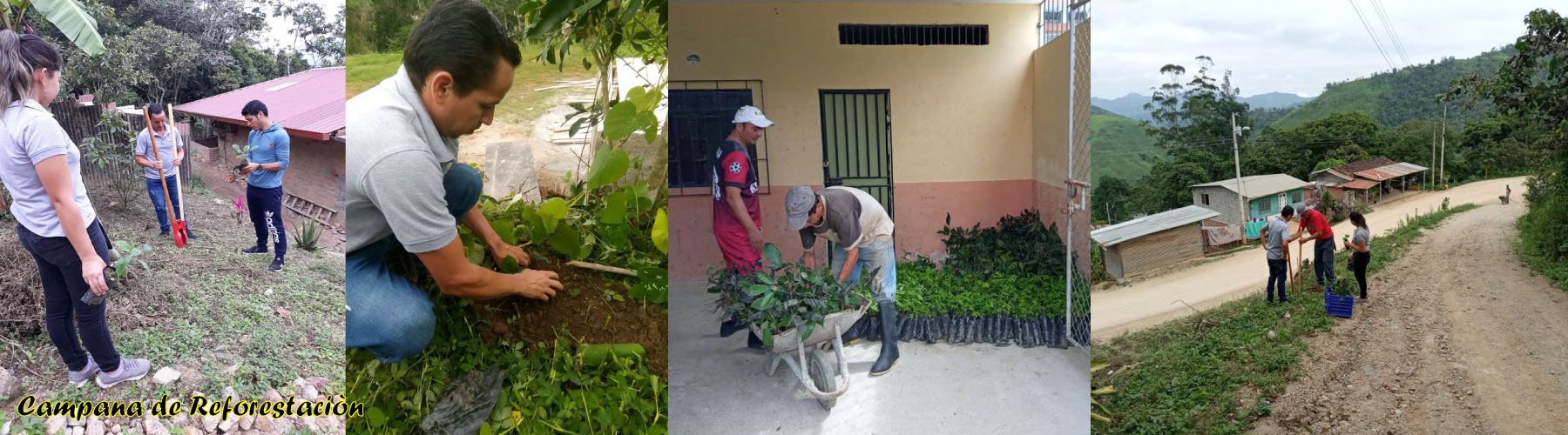 campaa-de-reforestacin.jpg